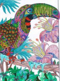 Birds Coloring Tropical Bird