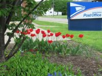 May Flowers at the Post Office