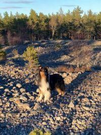Strix at the cobblestone field