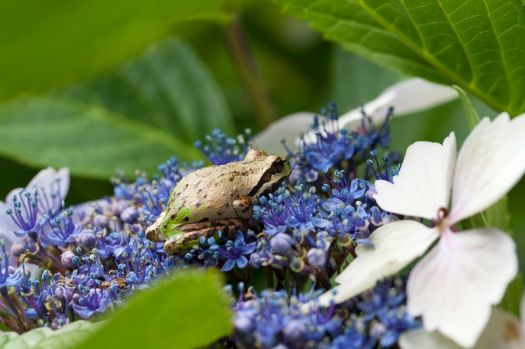 Frog on Flowers