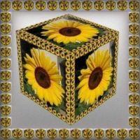 Slunečnice v krychli...  Sunflowers in a cube