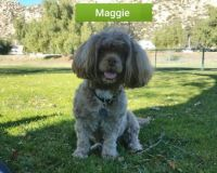 RIP My dear Maggie