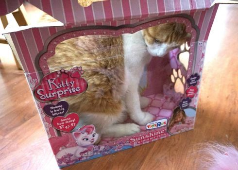Frankie in the Kitty Surprise box