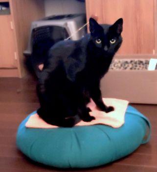 Ebony on zafu cushion - 2020/11