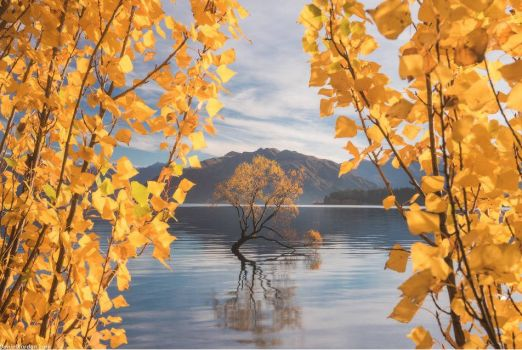 The Wanaka Tree, Lake Wanaka NZ