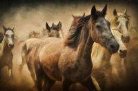 Horses at the gallop!!