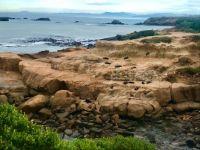 Seals aplenty