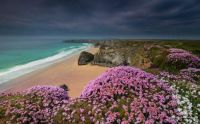 Blooming wildflowers atop of a cliffs along the beaches in Bedruthan Steps, Cornwall, England