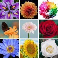 Flowers - Medium