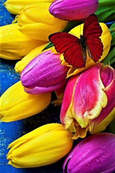 Springtime tulips and red butterfly by Garry Gay