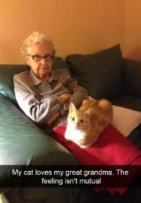My cat loves my great grandma ....