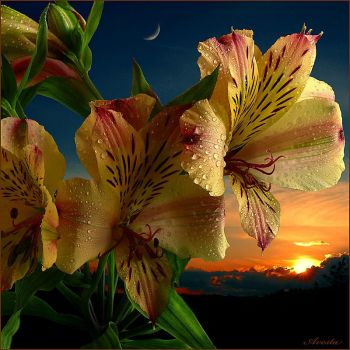 Tiger Lilies in the Twilight