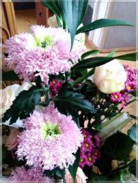 Chrysanthemums  -  Cryzantémy