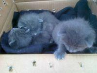 13. June 2011 - we found three abandoned kittens...