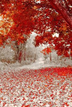 Winter meets Fall