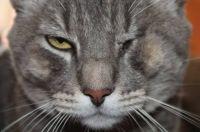 My cat's name is TOFU