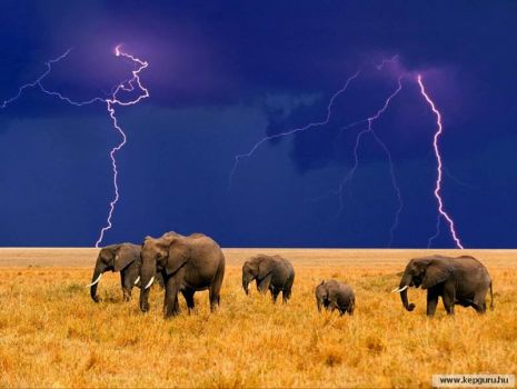 Elephants in thunderstorm