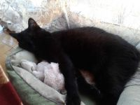 Raven sleeping with her Baby Bunny toy