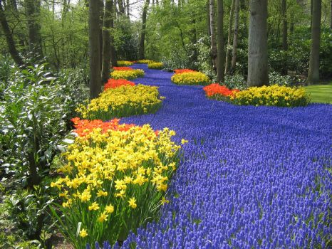 KEUKENHOF - the COLORS of HOLLAND
