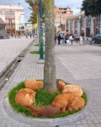 Dogs will fine the grass!