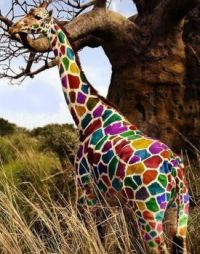 Giraffe of a different color