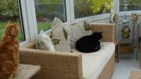 Ferdy and Sophie - we have been out but....