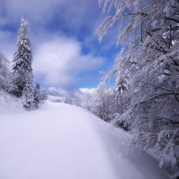 Nature in white winter clothes