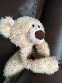 Teddy Reflecting