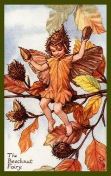 Beechnut fairy