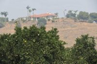 Hilltop Home Overlooking Orange Groves--Sultana, California