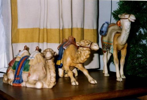 The Wise Men need their camels