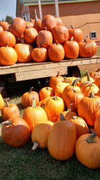 Pumpkin Stall