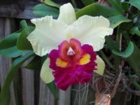 Rescued Orchid 2