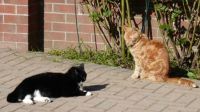 Sophie and Ferdy - enjoying some sun