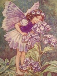 1930s vintage flower fairies
