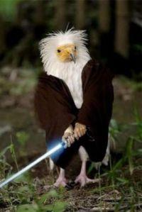 1  ~  Obi Wan Bird ....  'threatening by extinction'.