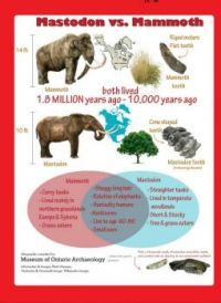 "THEME: ""Prehistoric Creatures""  Mammoth vs Mastodon - Facts"