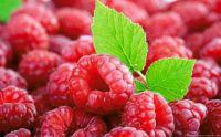 Tasty Raspberries