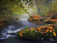 autumn-landscape-colorful-leaves_25289_990x742