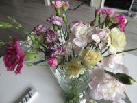 """Left over"" carnations ☺☺"