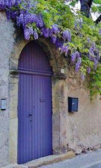 Purple Wisteria and Purple Door