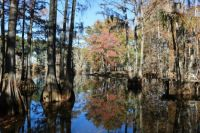 Fall on Bayou DeSiard