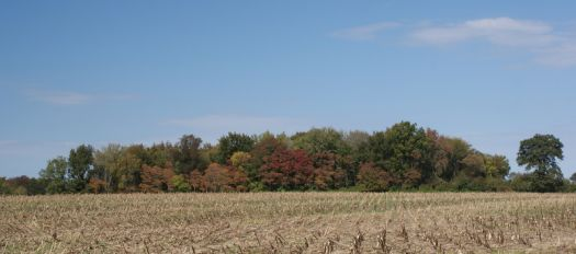 Fall in Southern Illinois