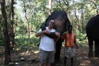 Elephants In Goa