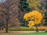 žlutý strom