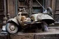 Abandoned Vespa - Dog and Puppies