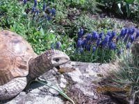 I želva má ráda modřence