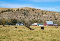 RANCHING IN MONTANA