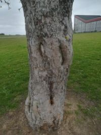 Tree near Norbrinken