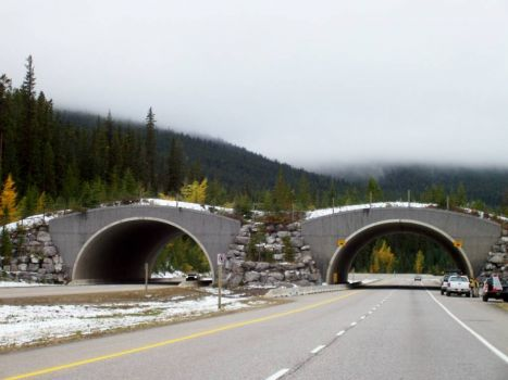 Wildlife Crossing, Alberta